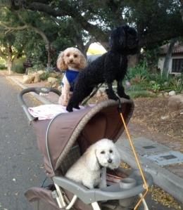 Three boys in stroller cropped 5.13